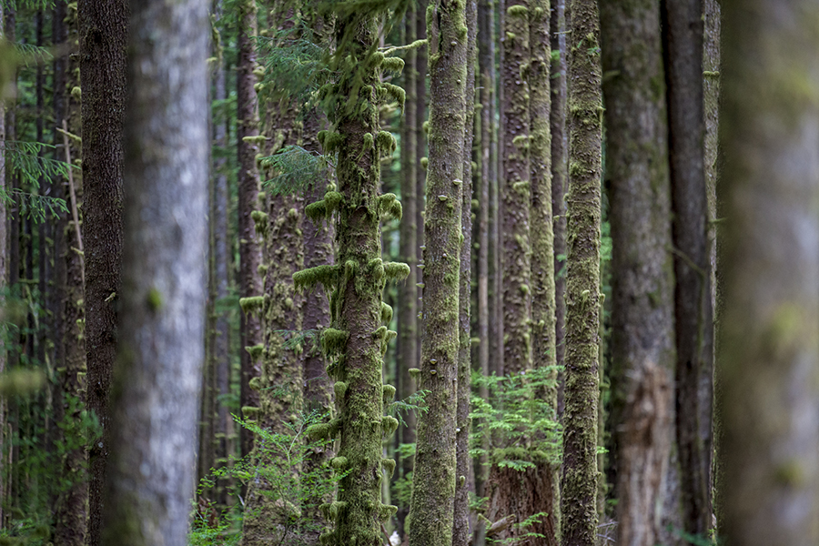 Christine Cox, Seattle Photographer, Hoh Rain Forest, Olypmic Peninsual